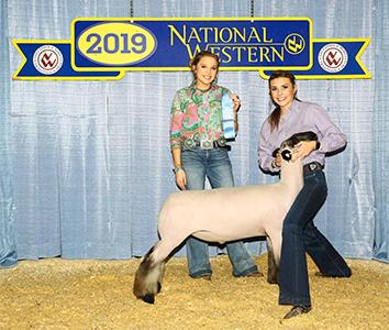Skidgel Club Lambs | Champions